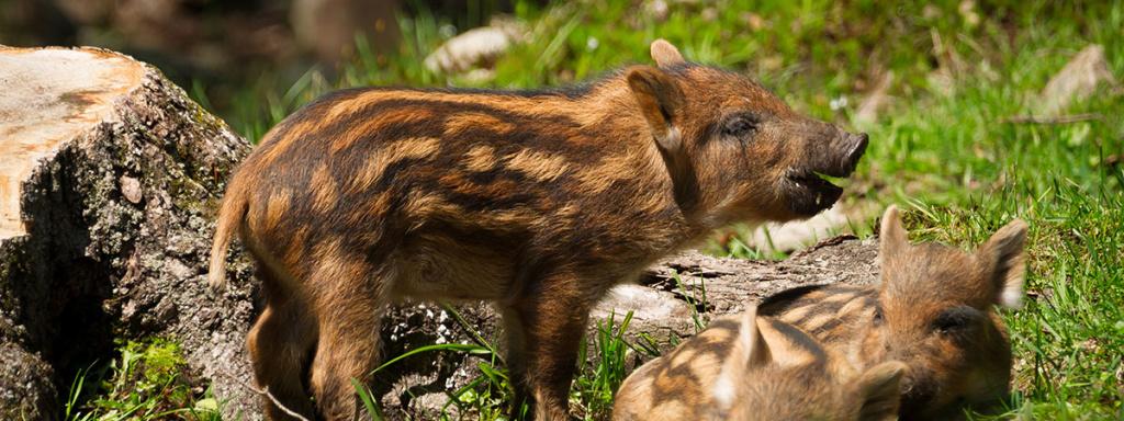 Ausflugsziele vom Bleiwanghof aus: Tierparks & Zoos