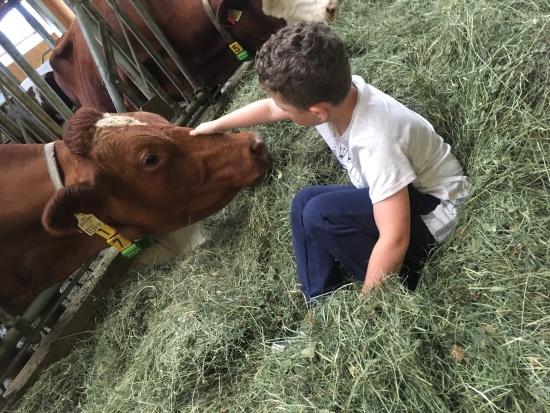 Max beim Kühe streicheln