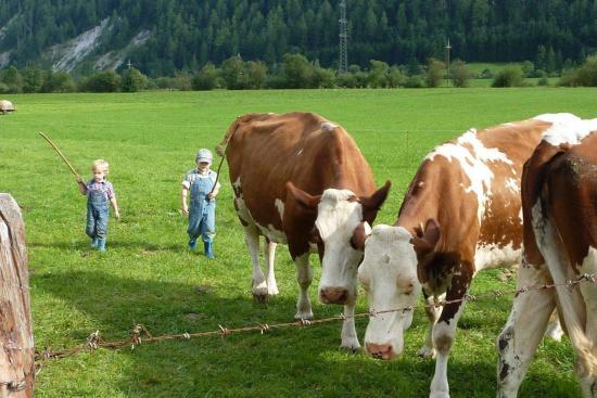 Urlaub am Bauernhof in Radstadt, Salzburger Land - Bleiwanggut